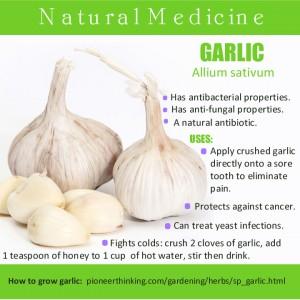 pt_garlic